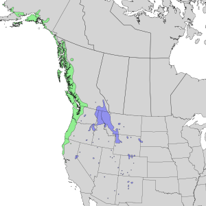 Sambucus racemosa subsp. racemosa - Image: Sambucus racemosa racemosa & melanocarpa range map 3