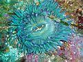 Sanc0045 - Flickr - NOAA Photo Library.jpg