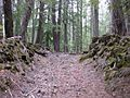 Santiam Wagon Road - Lava Field Management Segment.jpg