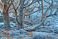 Sapphire Forest - HDR (10376870424).jpg