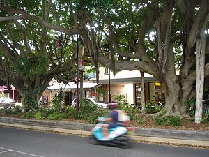 Sawtell New South Wales First Avenue median