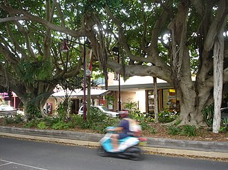 Sawtell, New South Wales - Image: Sawtell New South Wales First Avenue median