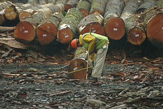 Log scaler - Rollout scaling in Oregon Log yard
