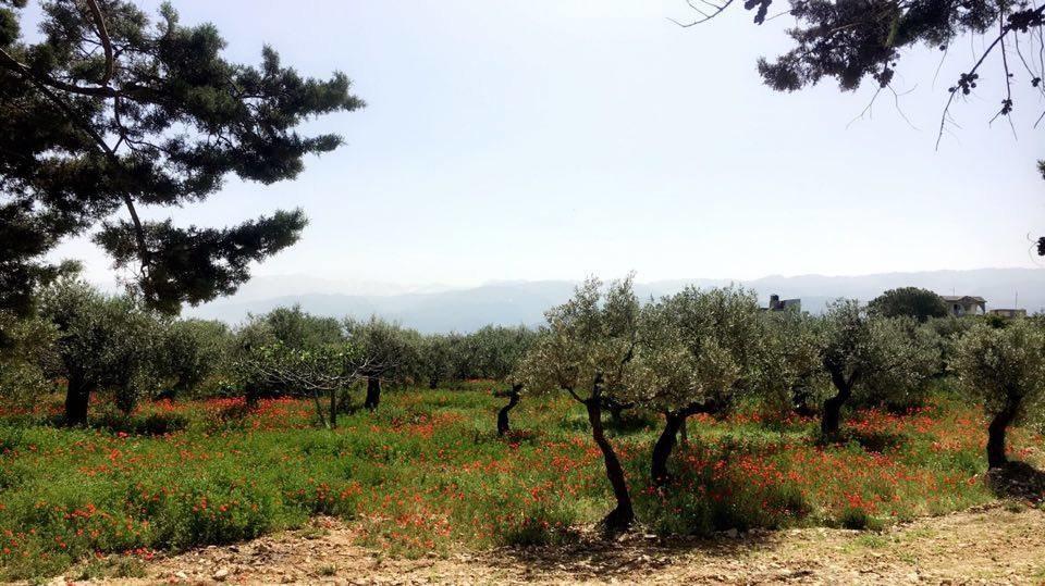 Scenery Lebanon