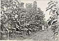 Schlich's Manual of forestry (1904) (14773123921).jpg