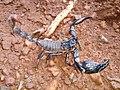 Scorpion (2).jpg