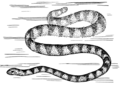 Sea Snake (PSF).png