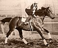 Seabiscuit workout with GW up.jpg