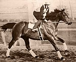 Seabiscuit on workout with George Wolf