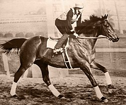 racehorses to remember seabiscuit