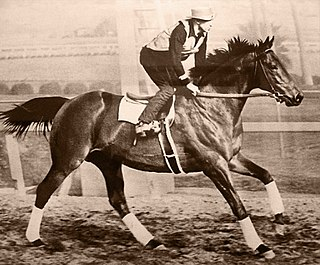 Seabiscuit champion thoroughbred racehorse in the United States