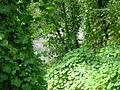 Selva montana, quebrada de Los Sosa, RP 307.JPG