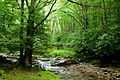 Seneca-Creek-Tree ForestWander.JPG