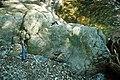 Serpentinite (East Dover Ultramafic Body, Ordovician; Adams Brook, east of East Dover, Vermont, USA) 5.jpg