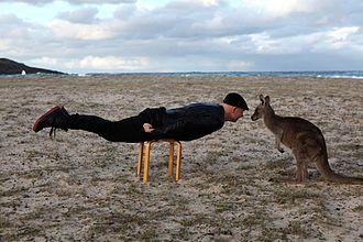 Shaun Gladwell - Gladwell planking with a Kangaroo