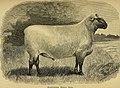 Sheep, breeds and management (1893) (14781570432).jpg