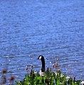 Shoreline Park, Mountain View California IMG 2747.jpg