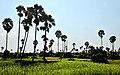 Siem Reap, campos 02.jpg