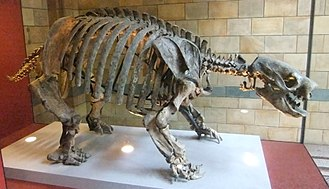 Glossotherium - Skeleton in Natural History Museum, London
