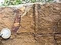Skolithos - Armorican Quartzite, Ordovician. Berrueco, Saragossa, Spain 004.JPG