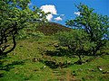 Slemish where St Patrick minded his sheep. - panoramio.jpg