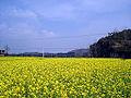 Spring - panoramio.jpg