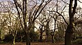 St Peters in the Forest 1.jpg