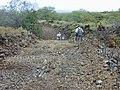 Starr-020422-0122-Zinnia peruviana-habitat with Art and crew-Puu o Kali-Maui (24466200061).jpg