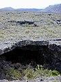 Starr-021003-0065-Sadleria cyatheoides-habitat and lava tube-Old Waikau trail HNP-Maui (23924659254).jpg