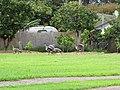 Starr-110513-5538-Citrus sinensis-habitat and nene on lawn-Hawea Pl Olinda-Maui (24468125223).jpg