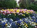 Stockholm, parterre de fleurs - 1.JPG