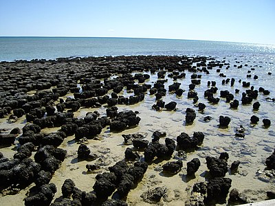 Stromatolites in Shark Bay
