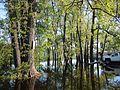 SubmergedTreesIrondequoitBay.jpg