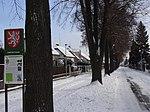 Suchdol - stromořadí lip srdčitých v Gagarinově ulici na Budovci (19).jpg