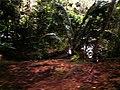 Sumberbening, Bantur, Malang, East Java, Indonesia - panoramio (1).jpg