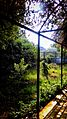 Sunshine Plants.jpg
