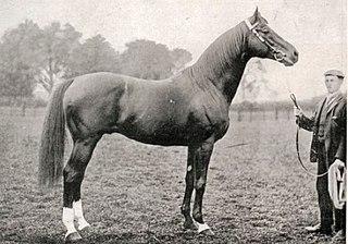Surefoot British-bred Thoroughbred racehorse