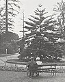 Sydney Botanic Garden (26739602801).jpg