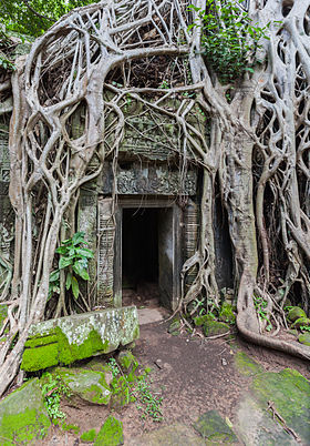 Image illustrative de l'article Ta Prohm
