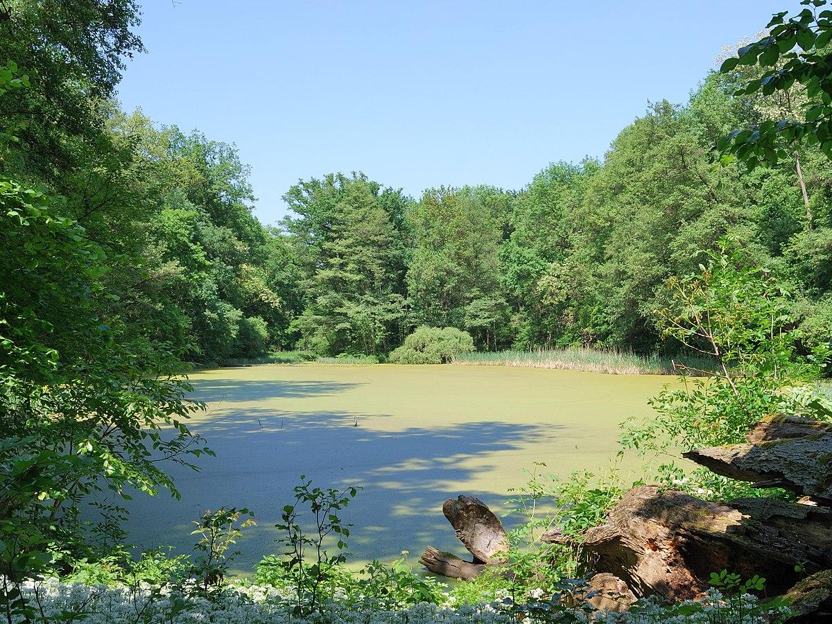 Greutterwald wikipedia for Habitat stuttgart