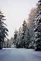 Talvine Rääsa Savala tee.jpg