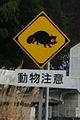 Tanuki Crossing (3146714424).jpg