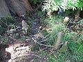 Taxodium distichum pneumatophore 02 by Line1.jpg