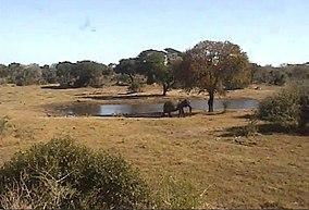 Tembe Elephant Park - WikiVisually