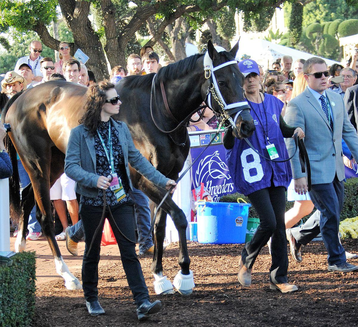 Tepin Horse Wikipedia