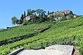 Terrasses de Lavaux - panoramio (14).jpg