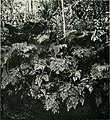 The American Museum journal (c1900-(1918)) (18161796281).jpg