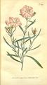 The Botanical Magazine, Plate 289 (Volume 9, 1795).png