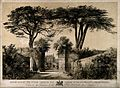 The Physic Garden, Chelsea; a view showing the pair of cedar Wellcome V0014723.jpg