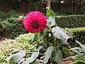 The Pink plant.JPG